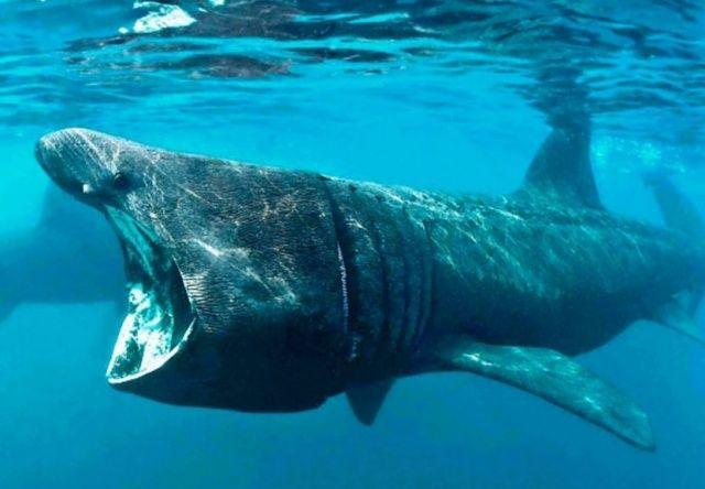 Гренландиядан ең қарты акула табылды - на weekend.bugin.kz