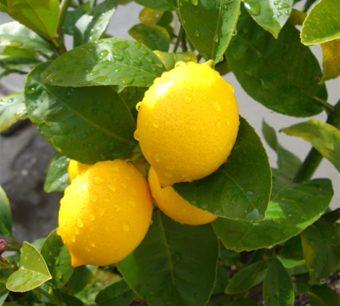 Лимон арықтауға көмектеседі - на health.bugin.kz