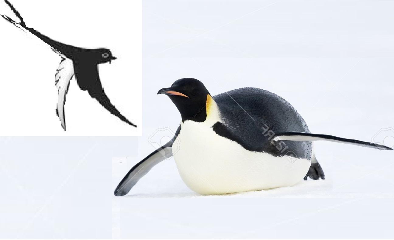 Сұр қарлығаш пен пингвиннің достығы - на bugin.kz